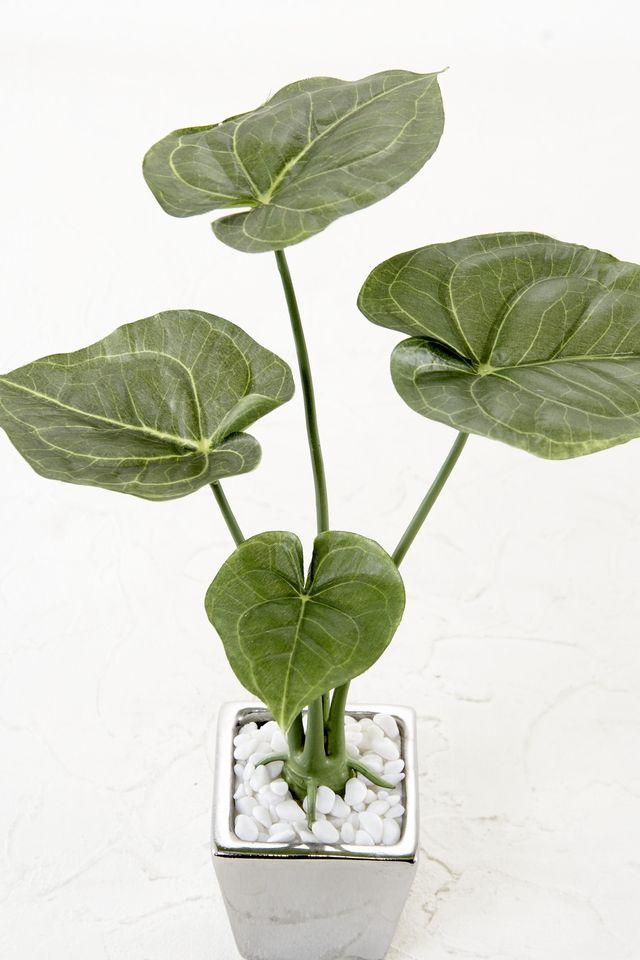 【造花 観葉植物】フィロデンドロンソデロイポット