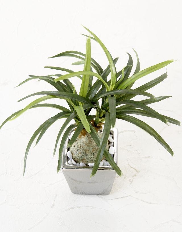 【造花 観葉植物】ノリナポット